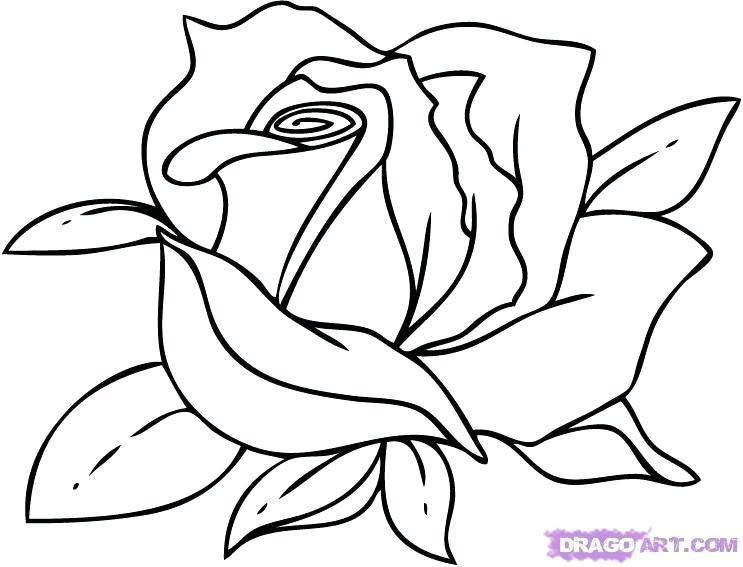 743x567 flowers drawings easy flowers drawings rose easy flowers drawings