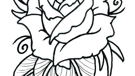 570x320 flower drawing outline rose flower outline picture rose flower