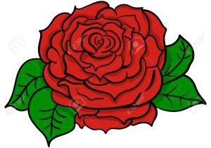 300x210 rose flower drawing rose flowers drawing pencil sketch rose flower
