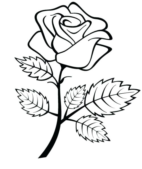 500x594 Beauty And The Beast Rose Coloring Pages Rose Coloring Pages