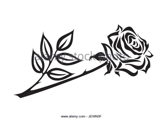 640x470 beauty and the beast rose drawing beauty and the beast rose