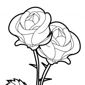300x300 Rose From Beauty And The Beast Drawing Shopatcloth