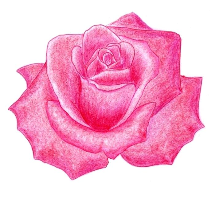 700x672 A Drawing Of A Rose How To Shade Rose Easy To Draw Roses For Beginners