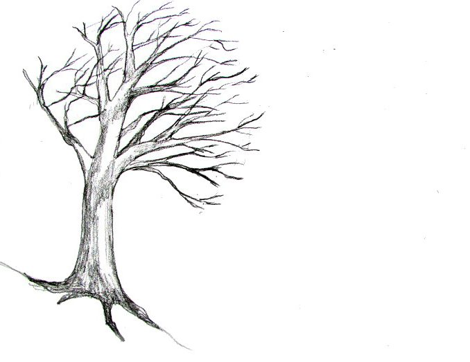 678x523 how to draw branches how to draw tree branches and twigs in pen