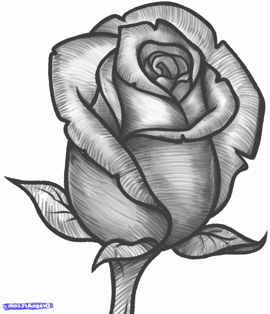 rose pencil drawing free download on clipartmag