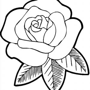 300x300 Easy Drawings Of Flowers Inspirationa How To Draw A Rose Flower