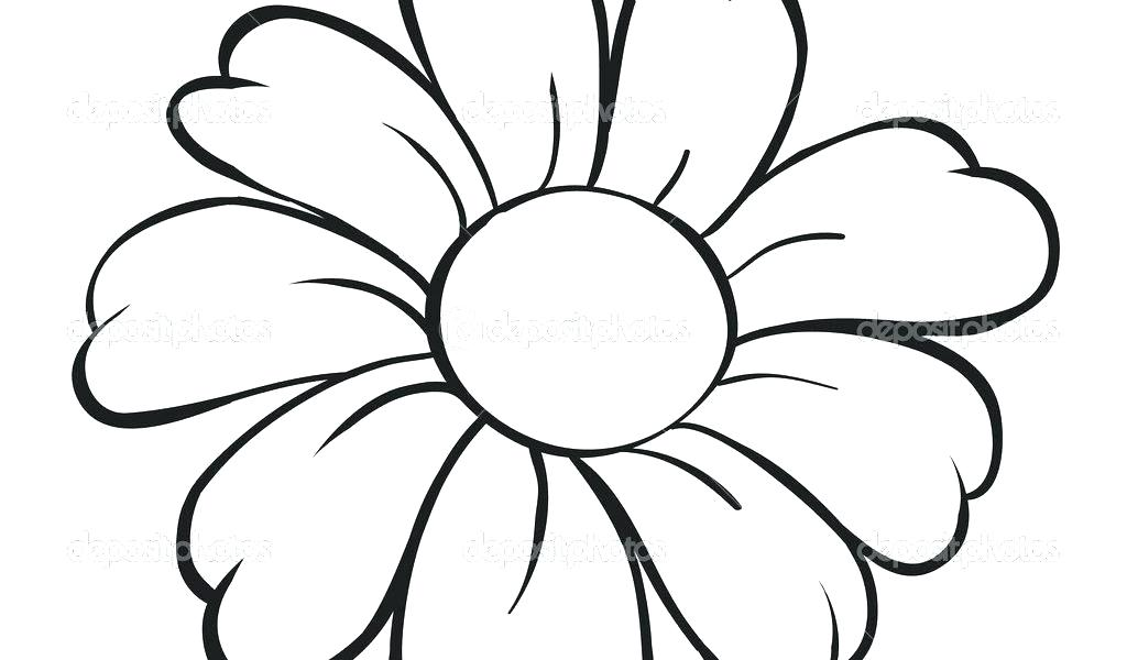 1024x600 Easy Pencil Drawings Of Flowers Stylized Acanthus Flower How