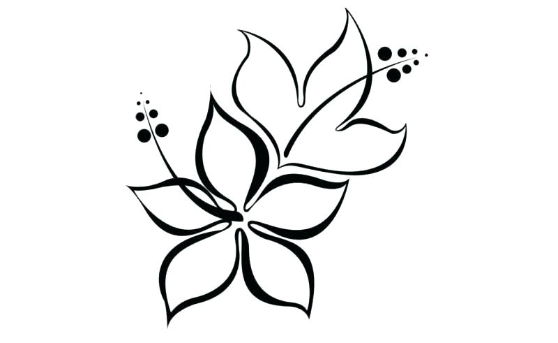 800x491 Flower Easy Drawing Easy To Draw Flowers Easy Flower Drawings
