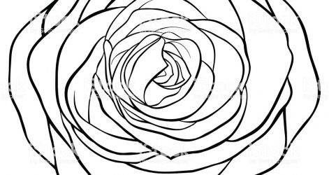 471x250 Free Black And White Rose Drawing Line Of A Pencil Skull Step