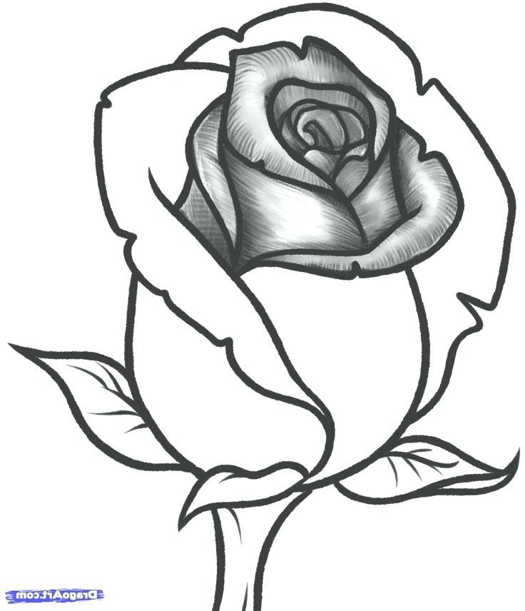 736x856 Rose Drawings Rose Bud Drawings Step