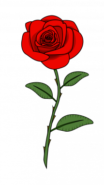 215x382 Drawing The Rose Transparent Png Clipart Free Download