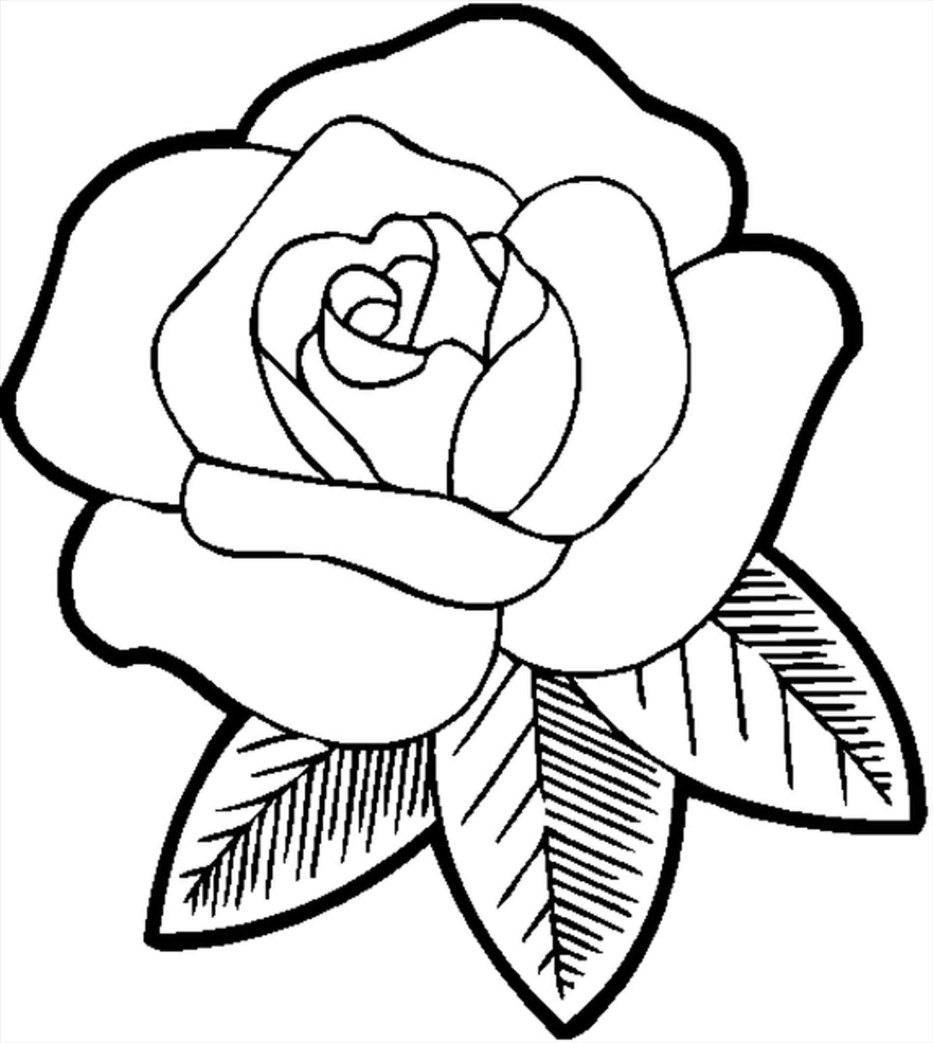 1899x2123 How To Sketch A Simple Rose Simple Rose Sketch Rose Drawing Simple