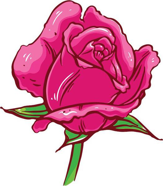 526x600 Huge Collection Of 'pink Rose Drawing' Download More Than
