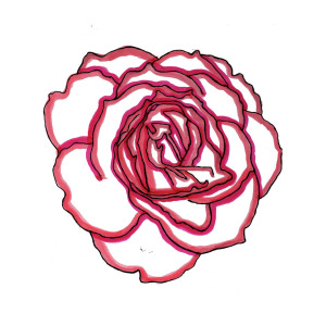 300x300 Red Rose Drawing Drawing