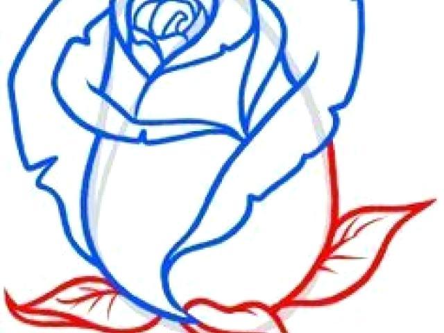 640x480 Basic Rose Drawing