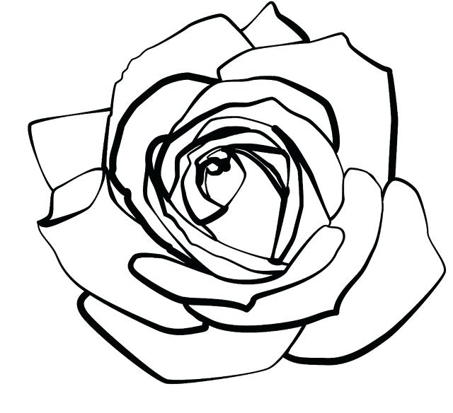 640x584 Rose Line Drawing Clip Art Zupa