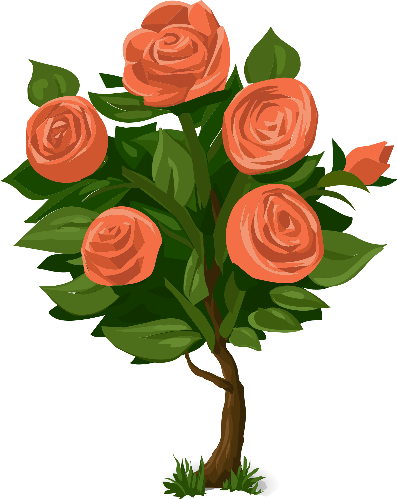 Rose Plant Drawing