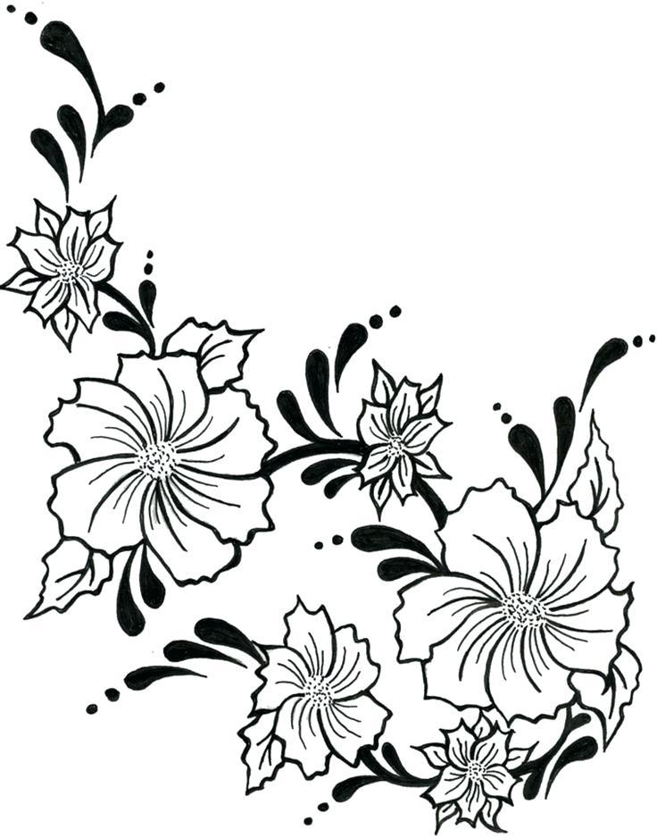 736x938 Drawings Of Vines Step Rose Vines Drawings