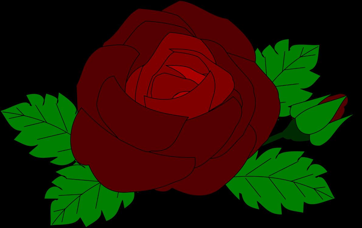 1190x750 Garden Roses Flower Drawing Rose Family Cc0