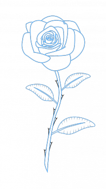 215x382 How To Draw Red Rose, Flowers, Plants, Easy Step