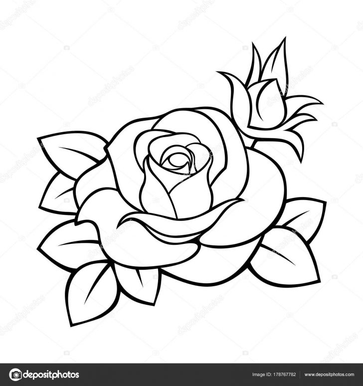 728x774 A Drawing Of Rose Simple Step