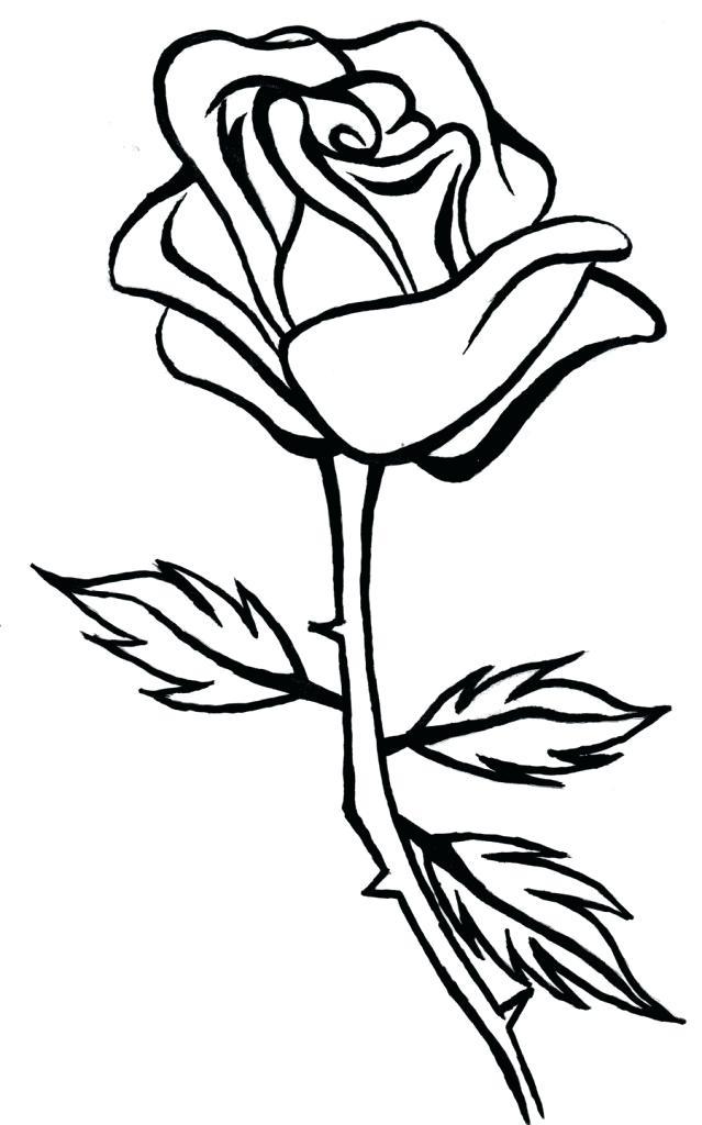 639x1024 Simple Rose Bud Drawing Bud Simple Rose Simple Rose Bud Line