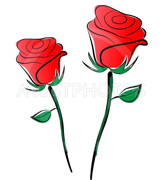 563x626 Vector Roses Drawing