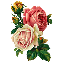 220x220 Flowers Roses Rose Plants Plant Flower Drawing Freetoed