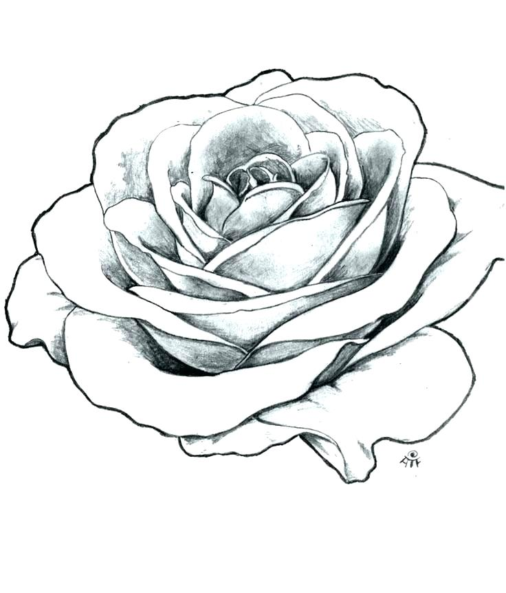 736x862 How To Draw Simple Rose
