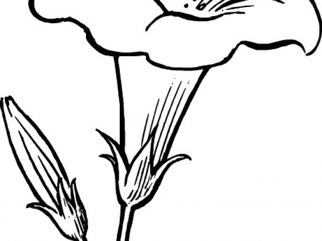 640x480 Drawing A Rose Plant Black Outline Drawing Flower White Flowers