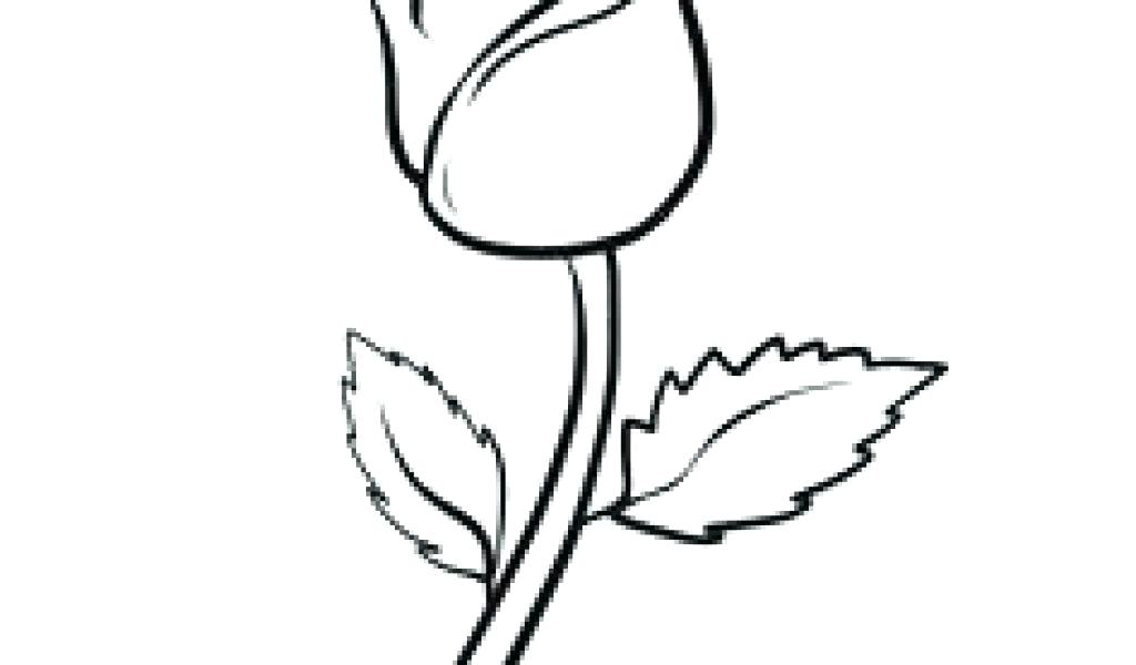 Rose Tattoo Drawing Designs