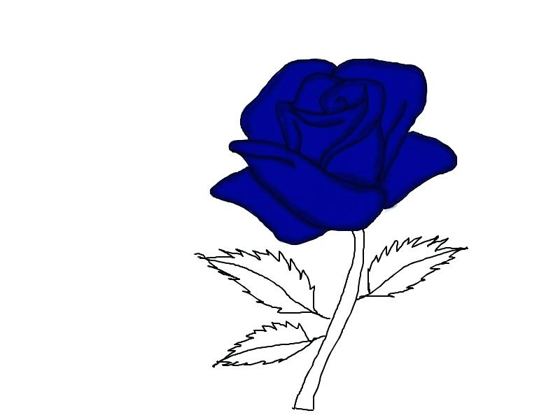 800x600 Blue Rose Drawing All Blue Rose Tattoo Designs
