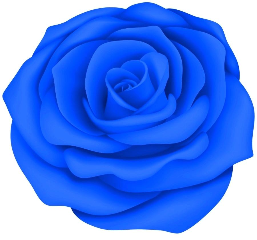 900x840 blue rose drawing blue rose poster best blue rose tattoo designs