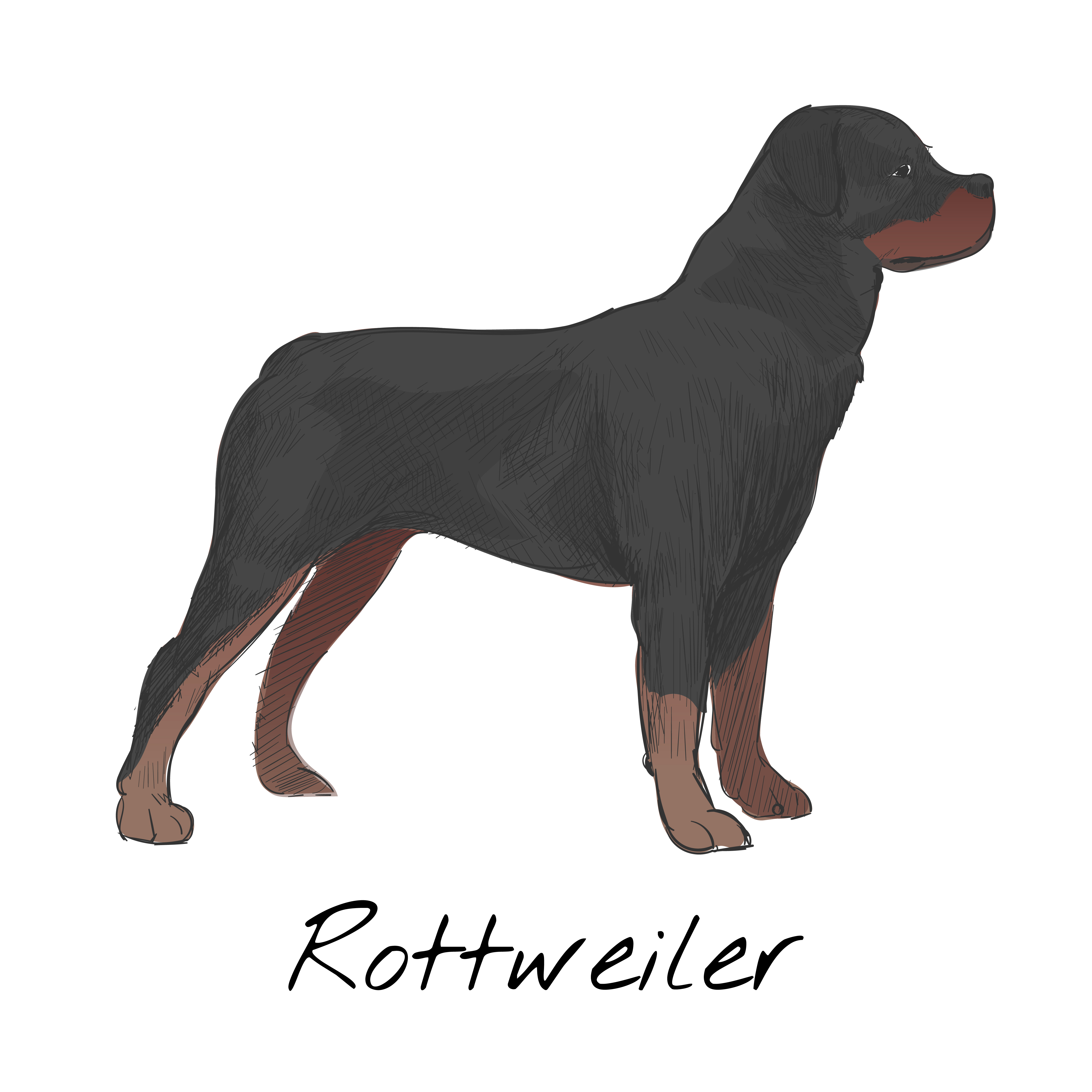 4681x4680 Illustration Drawing Style Of Dog
