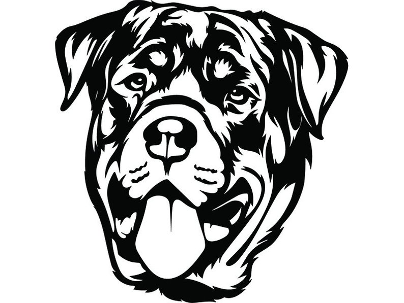 794x597 Rottweiler Dog Breed Animal Pet Guard Security Canine Etsy