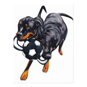 307x307 Rottweiler Pet Drawing Gifts On Zazzle Ca