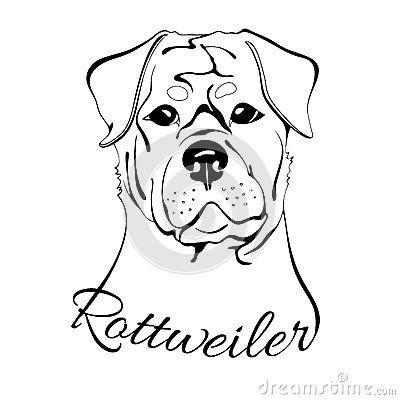 400x400 Rottweiler Dog Head Maybes Rottweiler, Puppy