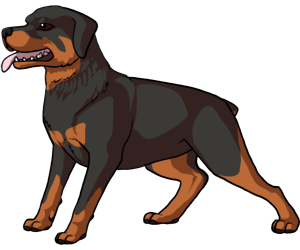 300x250 Collection Of Free Rottweiler Drawing Cartoon Download On Ui Ex