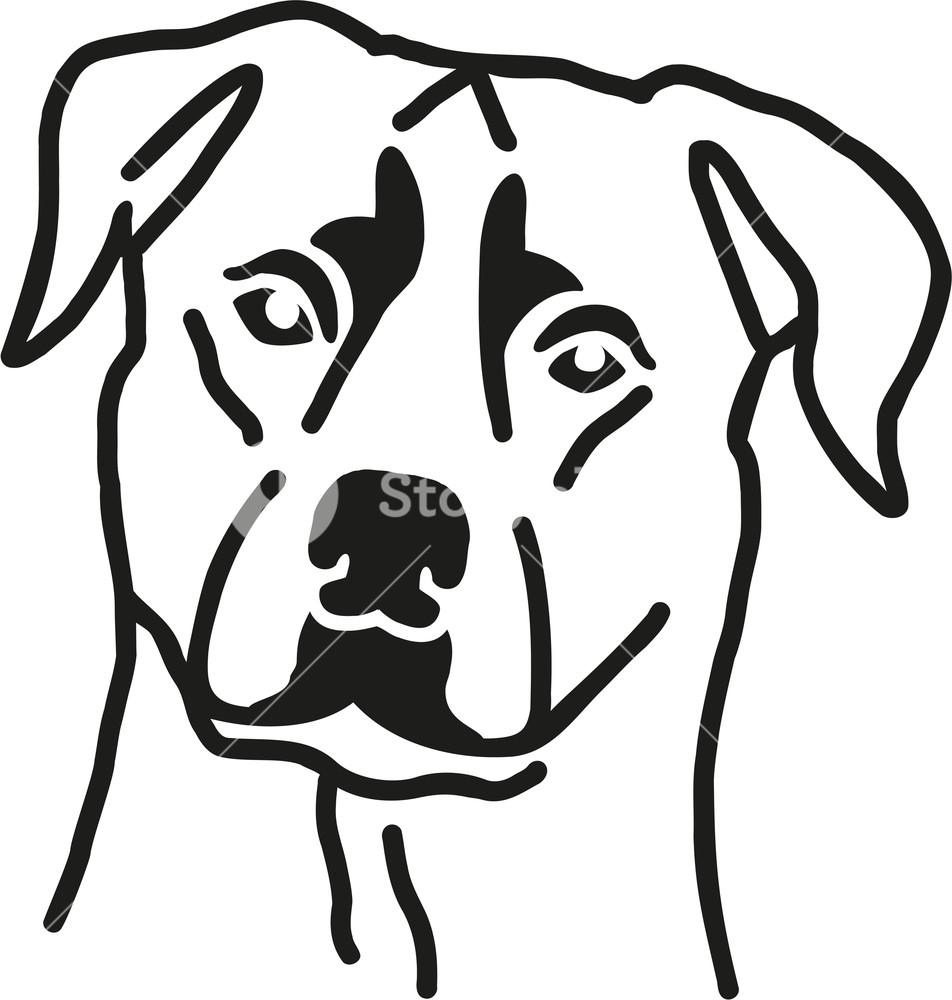 952x1000 Rottweiler Head Dog Royalty Free Stock Image
