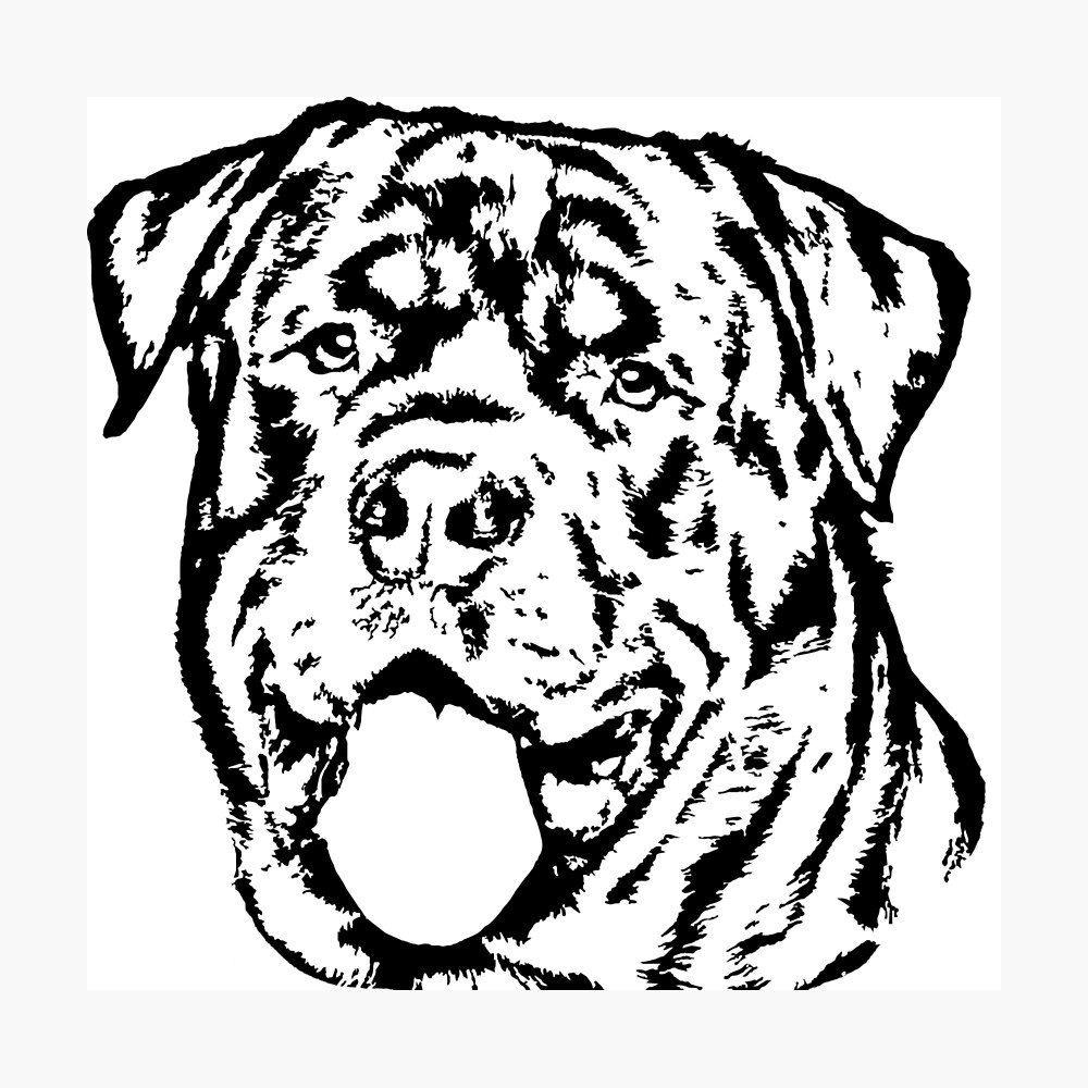 1000x1000 Rottweiler In Black And White Photographic Print