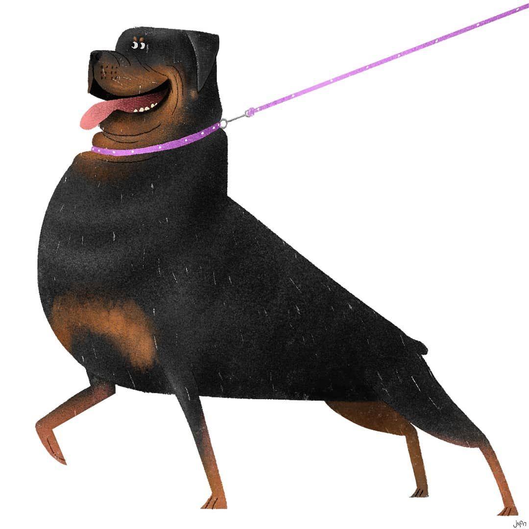 1080x1080 Rottweiler