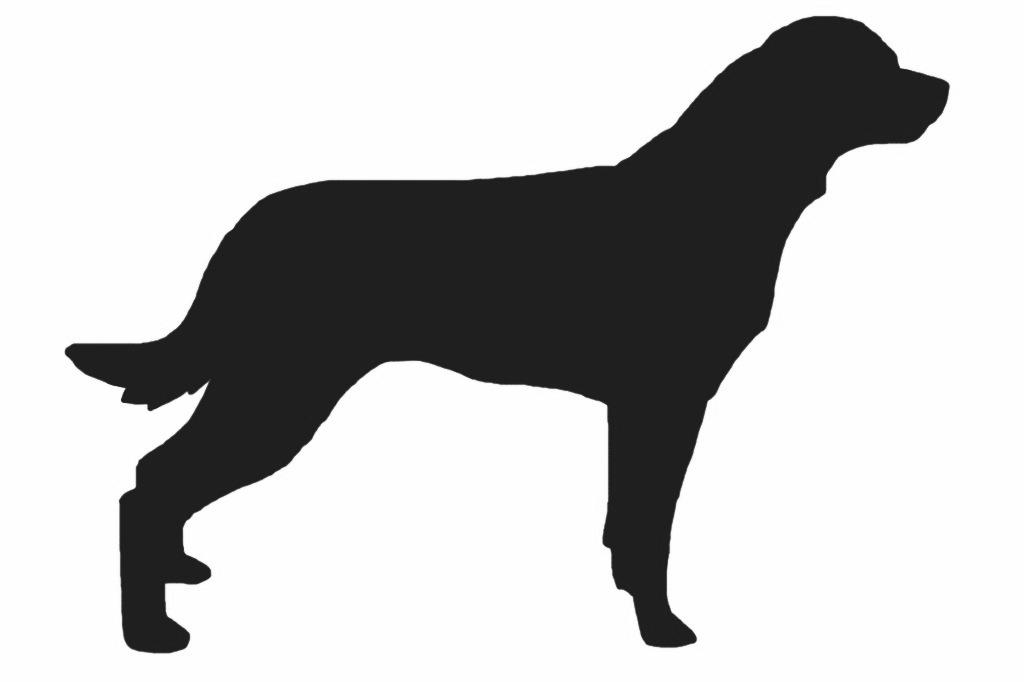 1024x682 Creth Davis Drawing Rottweiler