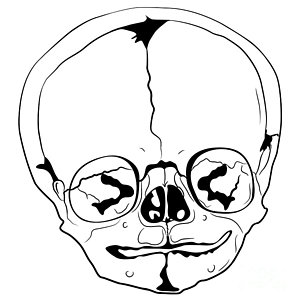 300x300 Skulls Drawings Royalty Free Images And Skulls Drawings Stock
