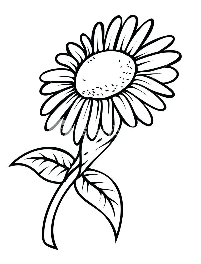 764x1000 Sunflower To Draw Sunflower Drawing Tutorial