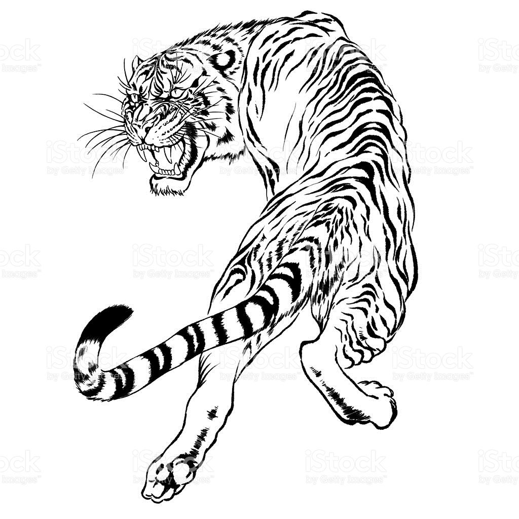 1024x1024 Black And White Drawing Of A Japanese Tiger Royalty Free Stock