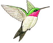 186x150 Hummingbird