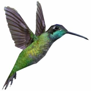 320x320 Hummingbird