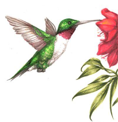 400x413 Hummingbird Drawings Displaying