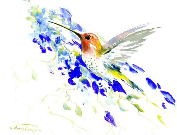 600x457 Hummingbird Drawings Fine Art America