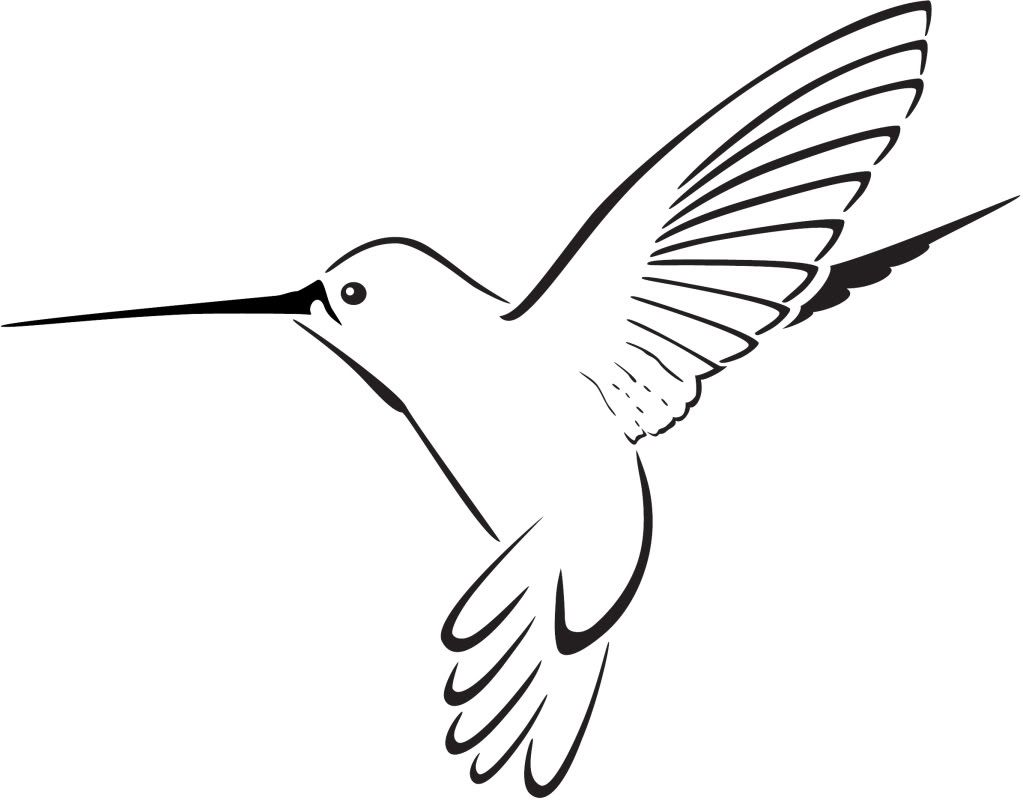 1023x803 Hummingbird Drawing Humming Bird For Free Download